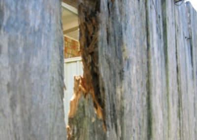 Example of wood decay fungi (Wood Rot)